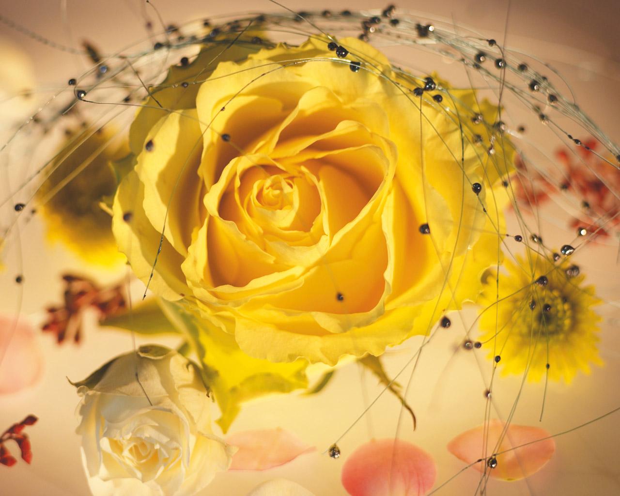 florarosejaune14840ab.jpg