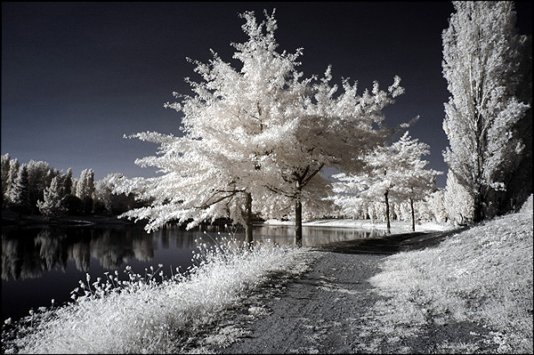paysagefeerique144607.jpg